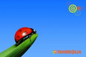 pikapolonica enegetska z logom tanergija